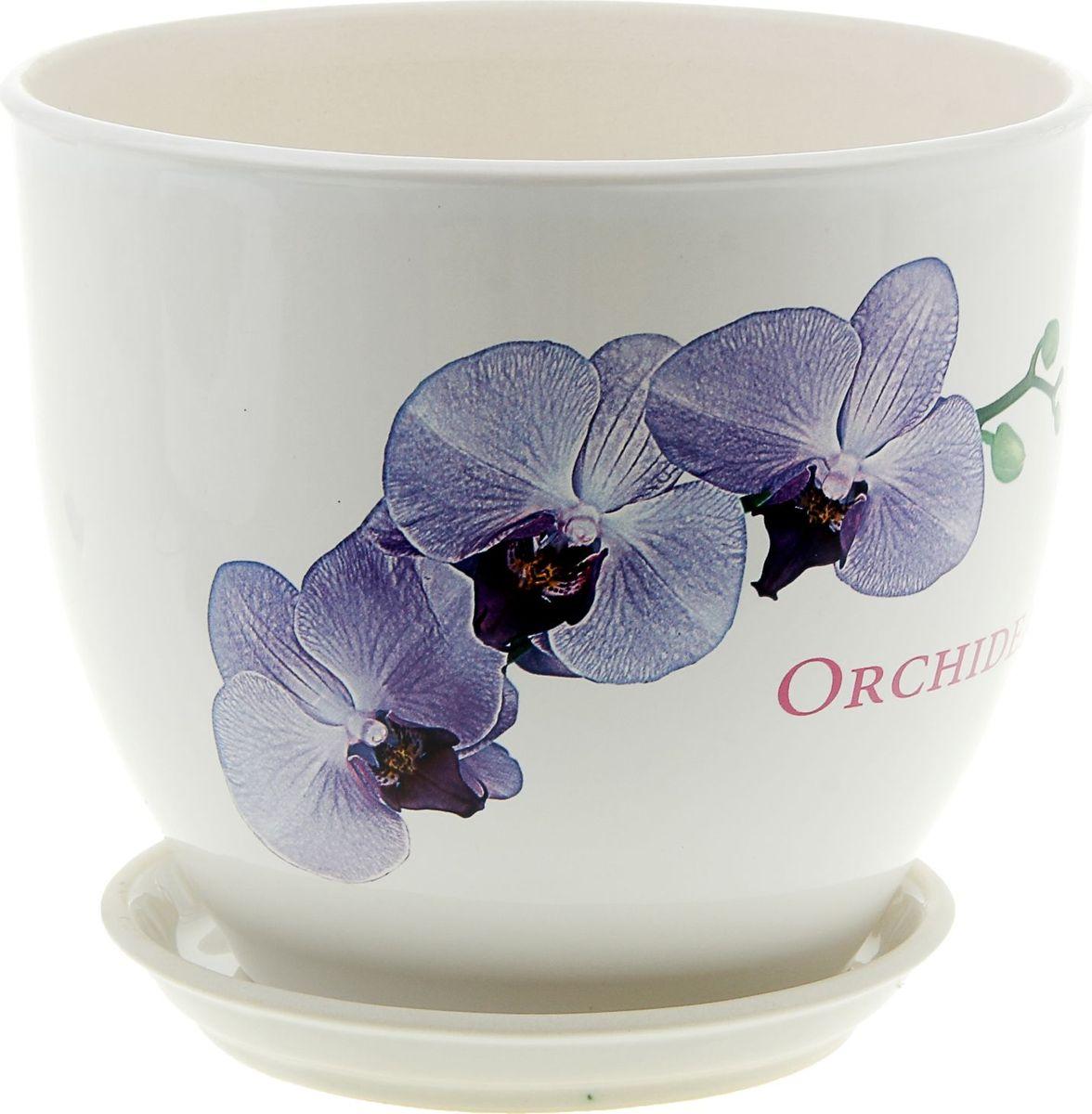 Кашпо Керамика ручной работы Виктор. Орхидея, цвет: белый, 4 л835555Комнатные растения — всеобщие любимцы. Они радуют глаз, насыщают помещение кислородом и украшают пространство. Каждому из них необходим свой удобный и красивый дом. Кашпо из керамики прекрасно подходят для высадки растений: за счёт пластичности глины и разных способов обработки существует великое множество форм и дизайновпористый материал позволяет испаряться лишней влагевоздух, необходимый для дыхания корней, проникает сквозь керамические стенки! #name# позаботится о зелёном питомце, освежит интерьер и подчеркнёт его стиль.