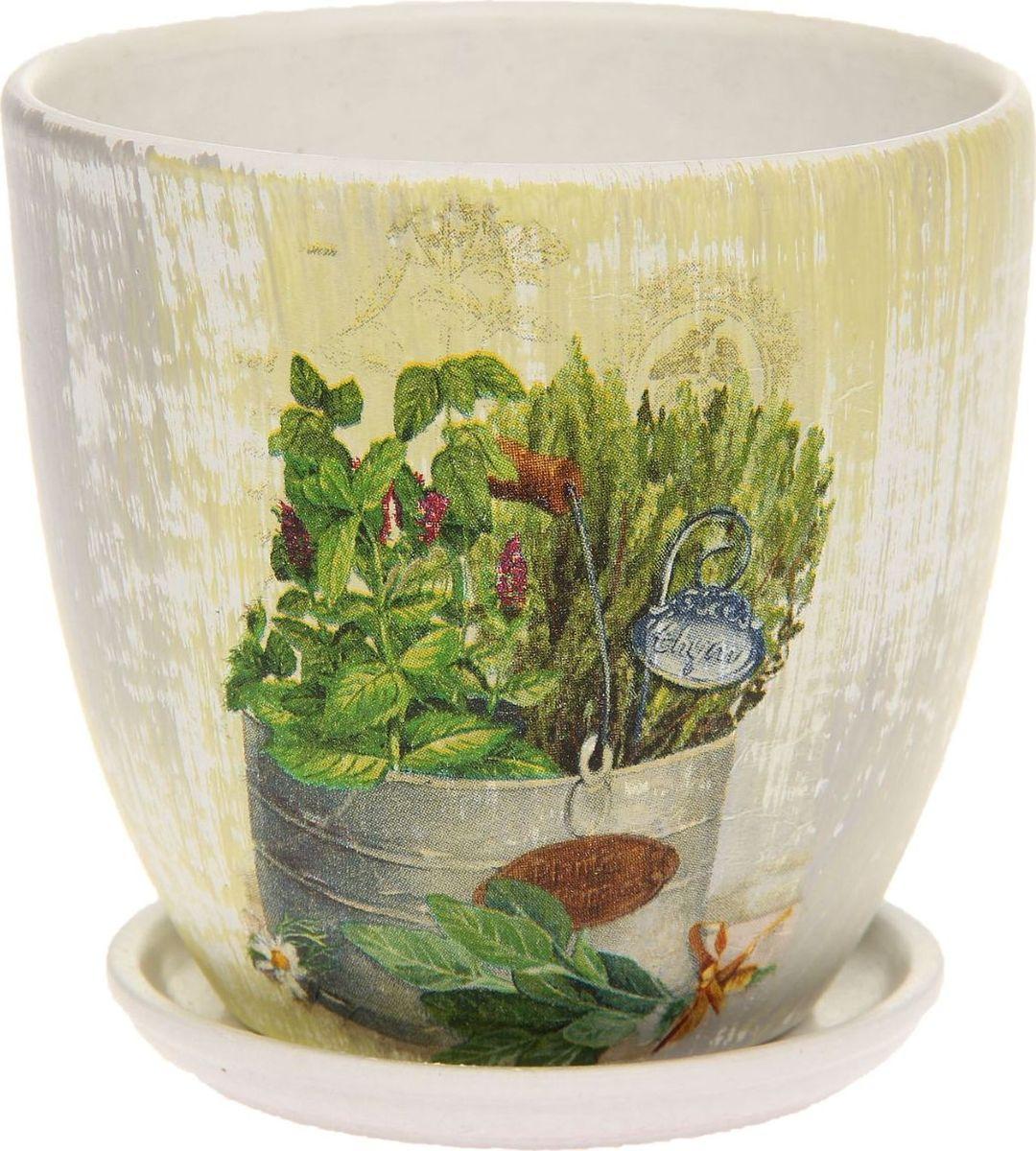 Кашпо Прованс, поддоном, цвет: белый, 0,8 л1138682Комнатные растения - всеобщие любимцы. Они радуют глаз, насыщают помещение кислородом и украшают пространство. Каждому из растений необходим свой удобный и красивый дом.Поселите зелёного питомца в яркое и оригинальное кашпо Прованс. Кашпо Прованс позаботится о растении, украсит окружающее пространство и подчеркнёт его оригинальный стиль. Объем: 0,8 л.