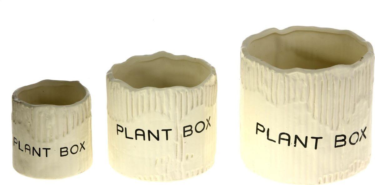 Набор кашпо Картон, цвет: белый, 3 предмета829932Комнатные растения — всеобщие любимцы. Они радуют глаз, насыщают помещение кислородом и украшают пространство. Каждому из растений необходим свой удобный и красивый дом. Кашпо из керамики прекрасно подходят для высадки растений: за счет пластичности глины и разных способов обработки существует великое множество форм и дизайнов пористый материал позволяет испаряться лишней влаге воздух, необходимый для дыхания корней, проникает сквозь керамические стенки. Набор кашпо Картон позаботится о зеленом питомце, освежит интерьер и подчеркнет его стиль. Добавьте помещению уют. Размеры: 10 х 10 см, 13 х 12 см, 16 х 15 см.
