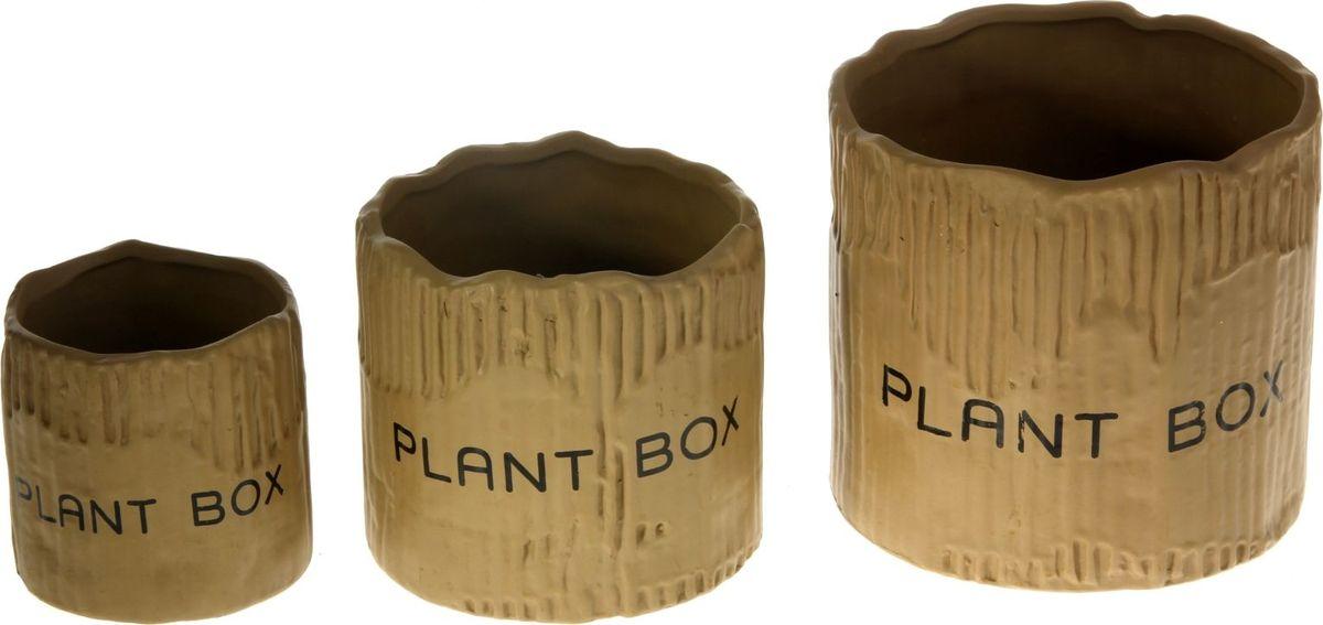 Набор кашпо Картон, цвет: коричневый, 3 предмета829933Размеры: 10 х 10 см, 13 х 12 см, 16 х 15 см.Комнатные растения — всеобщие любимцы. Они радуют глаз, насыщают помещение кислородом и украшают пространство. Каждому из растений необходим свой удобный и красивый дом. Кашпо из керамики прекрасно подходят для высадки растений: за счёт пластичности глины и разных способов обработки существует великое множество форм и дизайновпористый материал позволяет испаряться лишней влагевоздух, необходимый для дыхания корней, проникает сквозь керамические стенки. Набор кашпо 3 шт. Картон коричневое позаботится о зелёном питомце, освежит интерьер и подчеркнёт его стиль. Добавьте помещению уют.