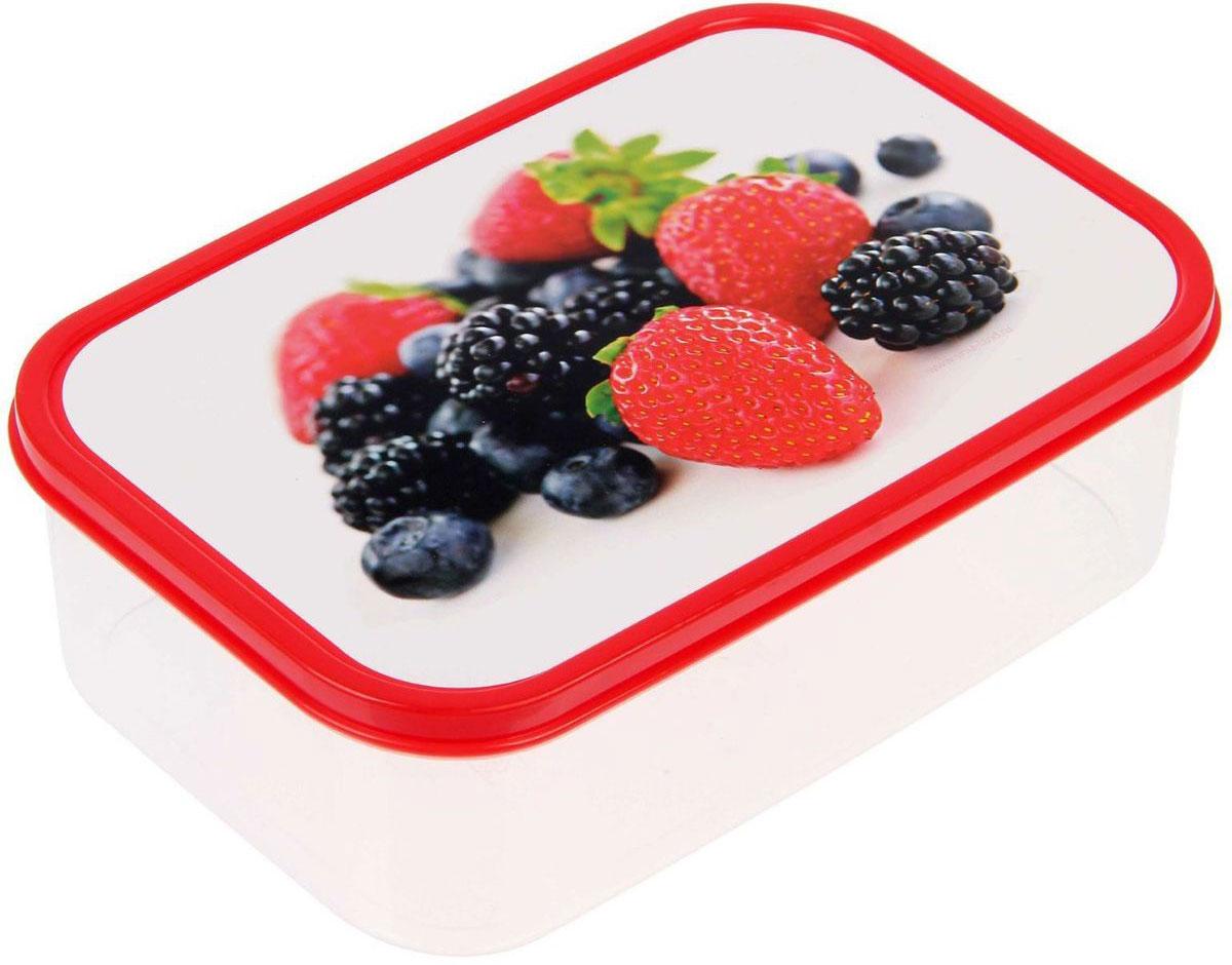 Ланч-бокс Доляна Клубника и ежевика, прямоугольный, 1,2 л1333935Ланч-бокс Доляна изготовлен из прочного пищевого пластика. В комплекте прилагается крышка подходящего размера, которая плотно и надежно закрывается и упрощает процесс транспортировки. Такой контейнер является незаменимым предметом кухонной утвари, ведь у него много преимуществ: Простота ухода. Ланч-бокс достаточно промыть теплой водой с небольшим количеством чистящего средства. Вместительность. Изделие позволяет разместить разнообразные продукты от сахара до супов. Эргономичность. Ланч-боксы очень легко хранить даже в самой маленькой кухне, так как их можно поставить один в другой по принципу матрешки. Многофункциональность. Он пригодится, если после вкусного обеда осталась еда, а насладиться трапезой хочется и на следующий день. Можно использовать не только на кухне, но и для хранения различных бытовых предметов, а также брать с собой еду на работу или учебу. Не использовать пластиковые контейнеры в духовых шкафах и на открытом огне, а также не разогревать в микроволновых печах при закрытой крышке ланч-бокса.