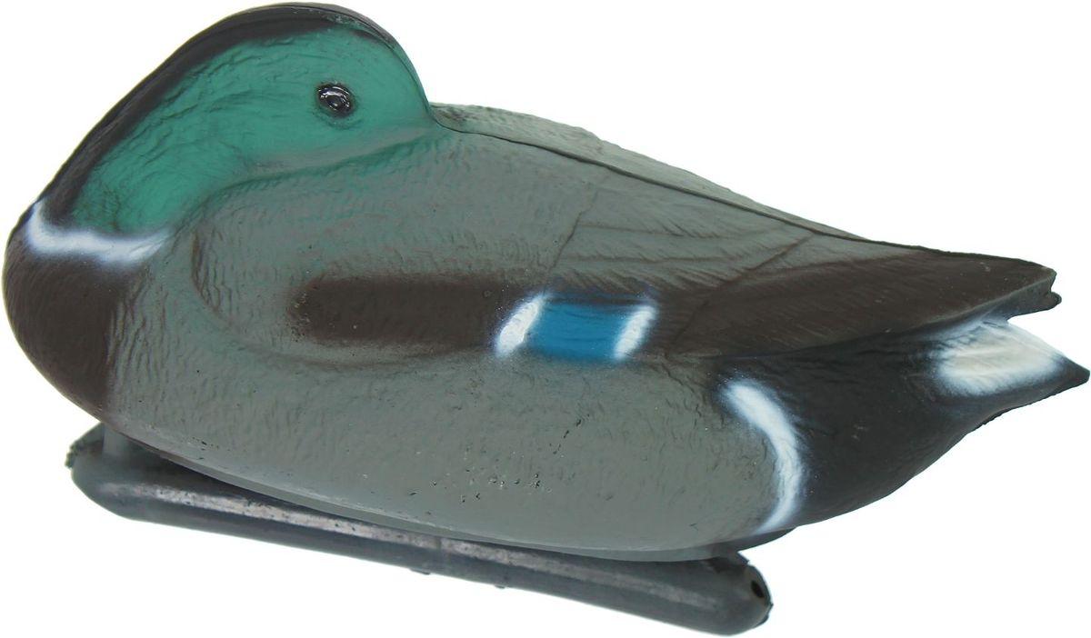 Фигура подсадная Отдыхающая кряква. Селезень1216306Подсадная фигура Отдыхающая кряква. Селезень выполнена из пластика, прошедшего специальную обработку, и покрыта антибликовыми красками. Материал отлично держится на воде и не крошится. Изделие имеет натуральную матовую окраску. Подсадное чучело часто используется для успешной охоты на уток, в основном на водоеме, в местах с хорошим обзором вокруг. Просто поместите его в место естественного обитания птицы, например, на воду или же в траву и примените манок. Не забудьте позаботиться о маскировке. Реалистичная подсадная фигура плюс духовой манок - и удачная охота обеспечена. Такая фигура также может использоваться для ландшафтного декора на дачном участке.
