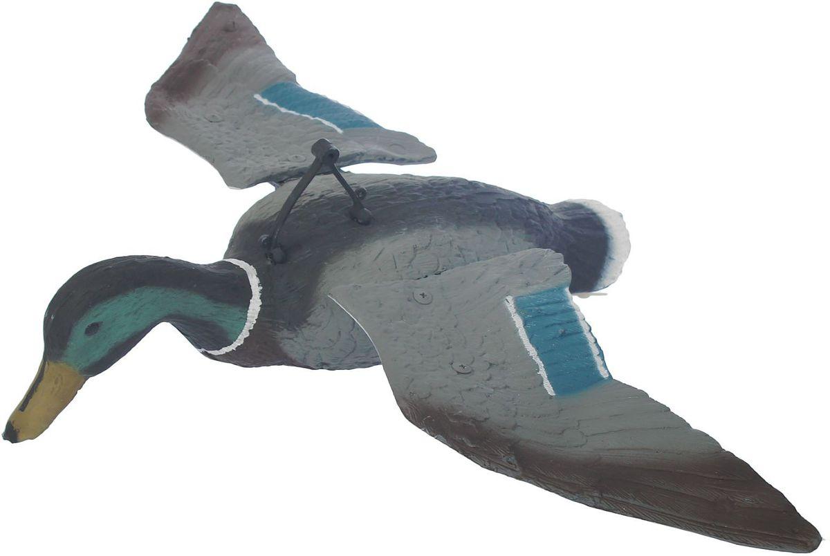 Фигура подсадная Парящая кряква. Селезень1303385Подсадная фигура Парящая кряква. Селезень выполнена из пластика, прошедшего специальную обработку, и покрыта антибликовыми красками. Материал отлично держится на воде и не крошится. Изделие имеет натуральную матовую окраску. Подсадное чучело часто используется для успешной охоты на уток, в основном на водоеме, в местах с хорошим обзором вокруг. Просто поместите его в место естественного обитания птицы, например, на воду или же в траву и примените манок. Не забудьте позаботиться о маскировке. Реалистичная подсадная фигура плюс духовой манок - и удачная охота обеспечена. Такая фигура также может использоваться для ландшафтного декора на дачном участке.