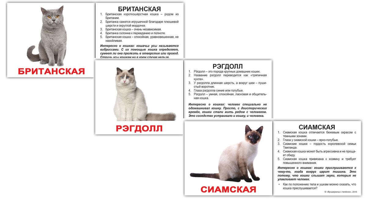 Вундеркинд с пеленок Обучающие карточки Мини 20 Породы кошек набор обучающих карточек мини 40 numbers числа вундеркинд с пеленок