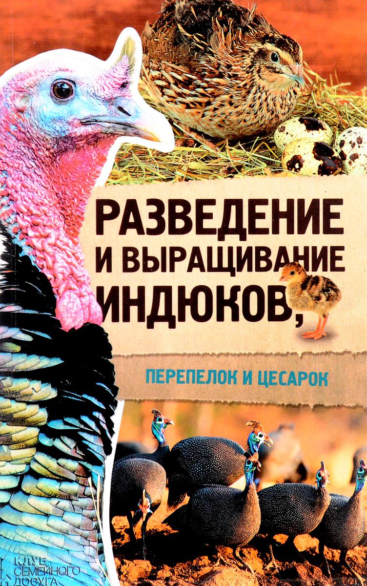 Разведение и выращивание индюков, перепелок и цесарок инкубаторских индюков белгородской области