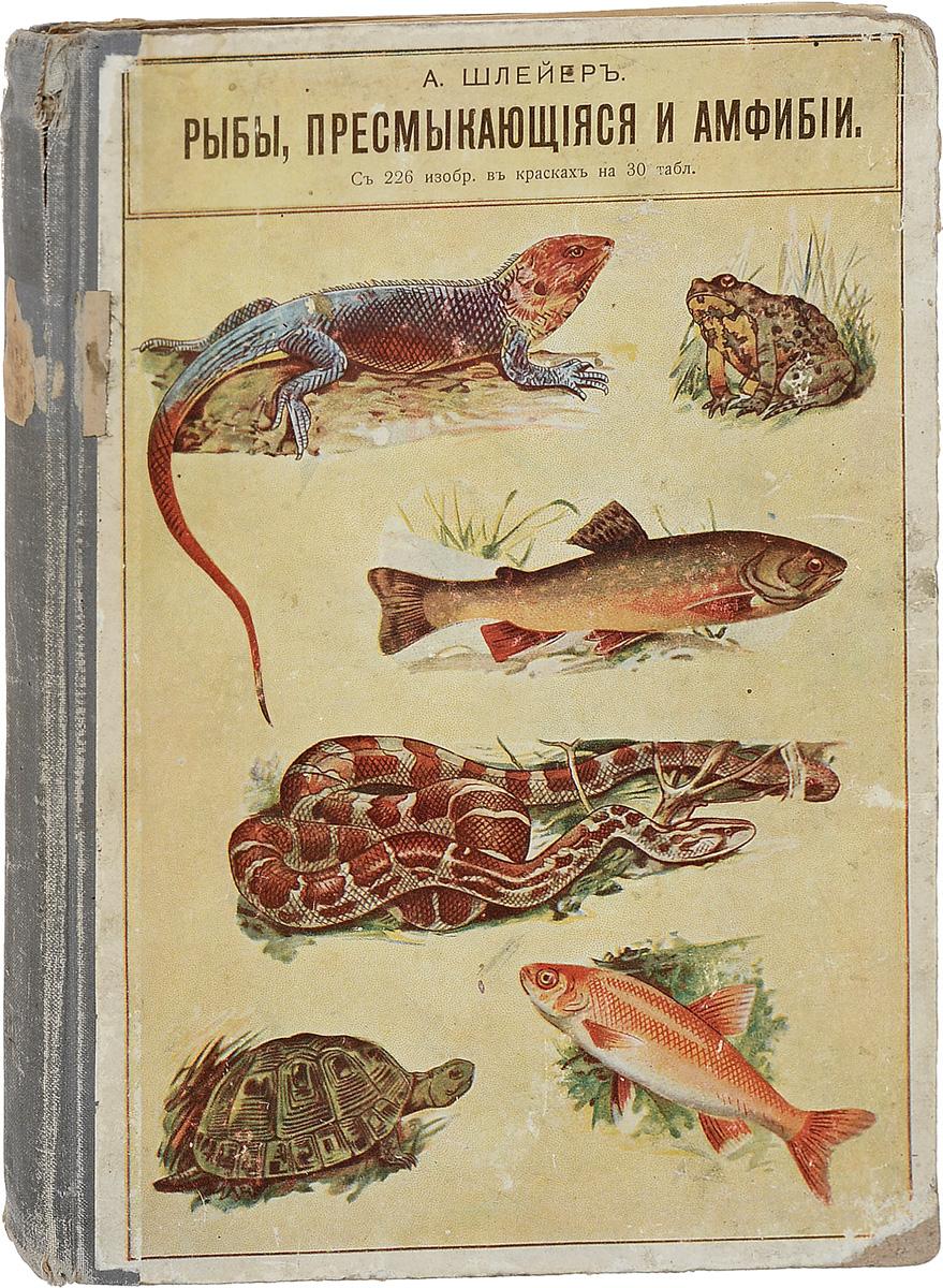 Рыбы, пресмыкающиеся и амфибии2505051Москва, 1912 год. Издание В.М.Саблина.Великолепно иллюстрированное издание с 3 рисунками в тексте и 226 изображениями в красках на 30 таблицах.Издательский переплет. Сохранность хорошая. Вашему вниманию предлагается красочно иллюстрированная книга А.Шлейера Рыбы, пресмыкающиеся и амфибии.Не подлежит вывозу за пределы Российской Федерации