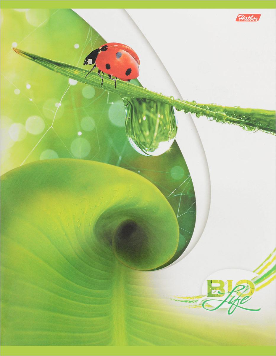 Hatber Тетрадь Bio Life 96 листов в клетку вид 396Т5B1__13072Тетрадь Hatber Bio Life отлично подойдет для занятий как школьнику, так и студенту.Яркая обложка бело-зеленого цвета с изображением божьих коровок, выполненная из плотного мелованного картона, позволит сохранить тетрадь в аккуратном состоянии на протяжении всего времени использования.Внутренний блок тетради, соединенный скрепками, состоит из 96 листов белой бумаги в голубую клетку с полями.