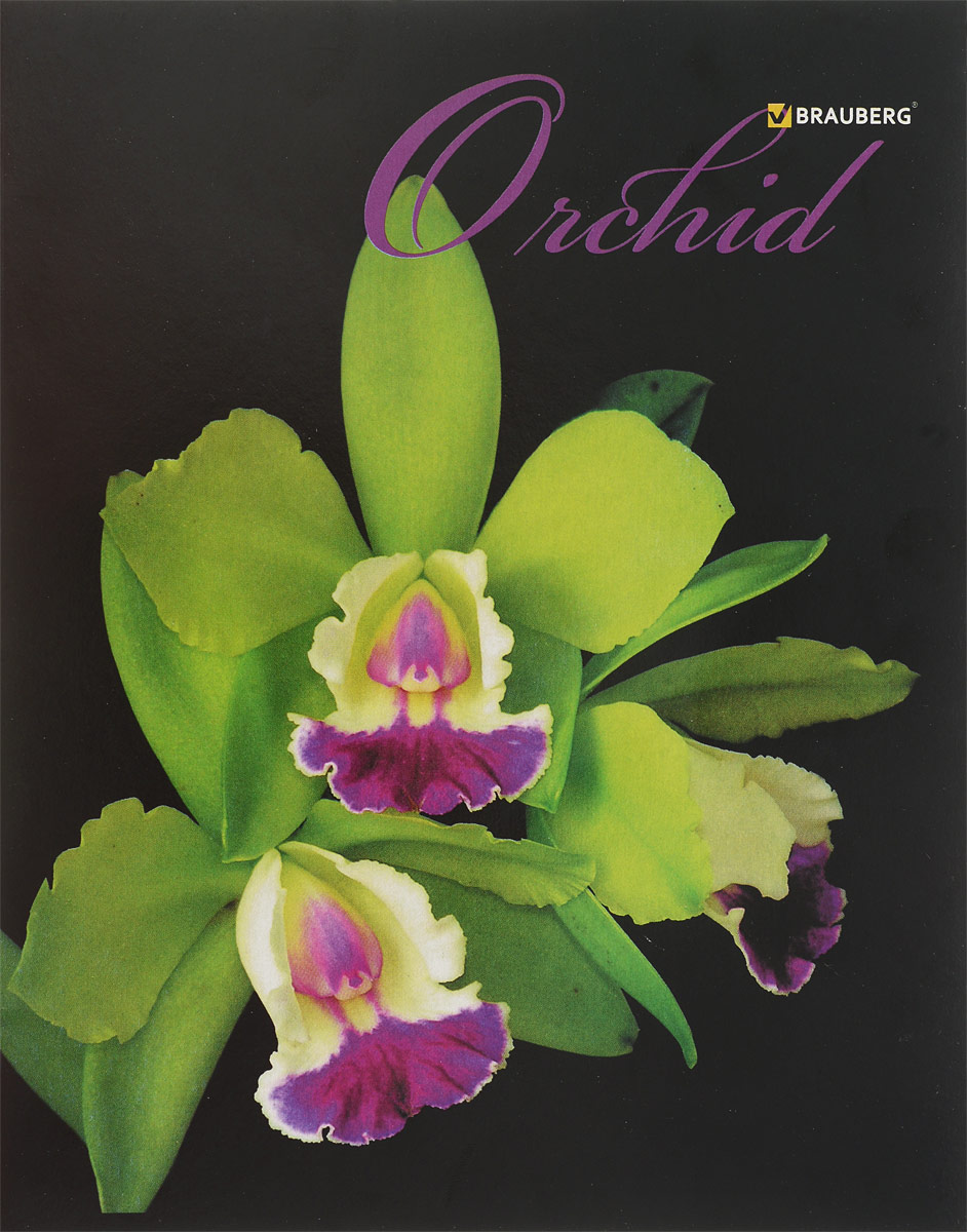 Brauberg Тетрадь Орхидеи 48 листов в клетку цвет зеленый brauberg бизнес тетрадь income 128 листов в клетку цвет черный