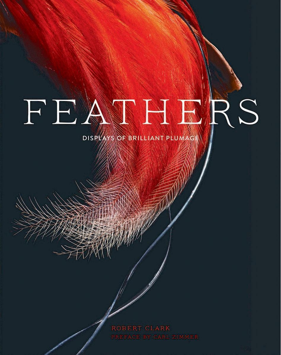 Zakazat.ru Feathers