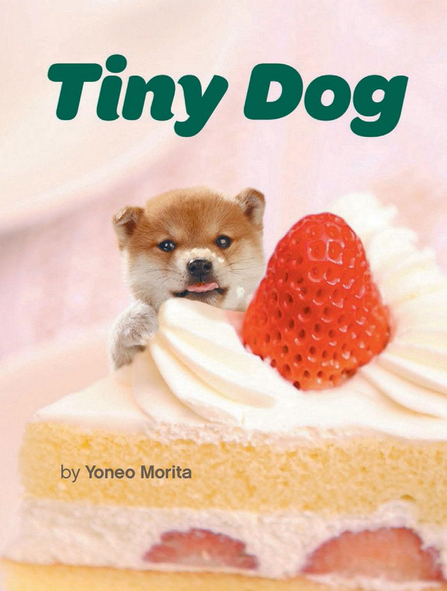 Tiny Dog james chellis mcsa