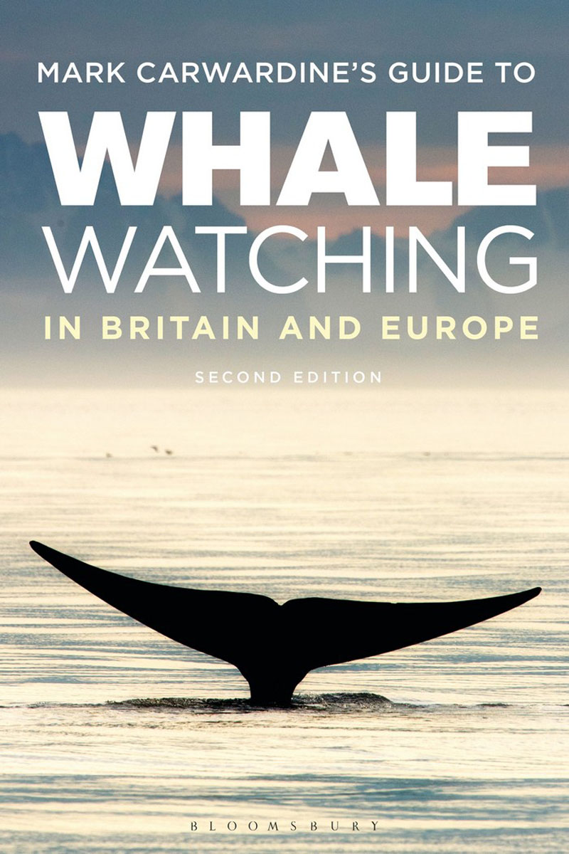 Mark Carwardine's Guide To Whale Watching In Britain And Europe