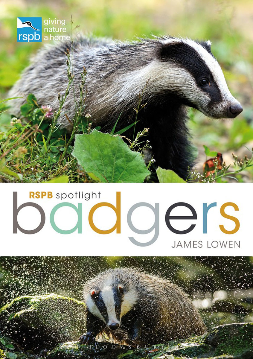 RSPB Spotlight: Badgers slaying the badger