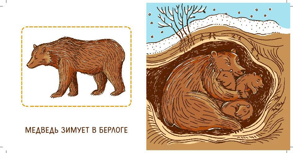 данном картинка где живет медведь подойдет для вас