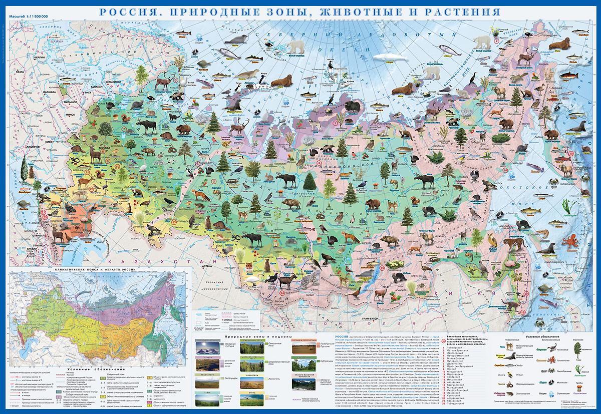 Россия. Природные зоны. Животные и растения. Карта
