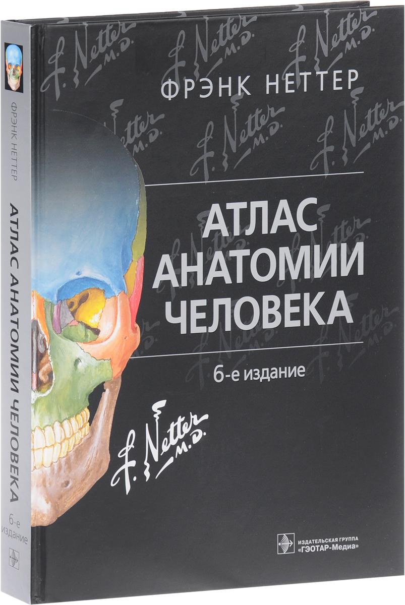 Фрэнк Неттер Атлас анатомии человека анна спектор большой иллюстрированный атлас анатомии человека