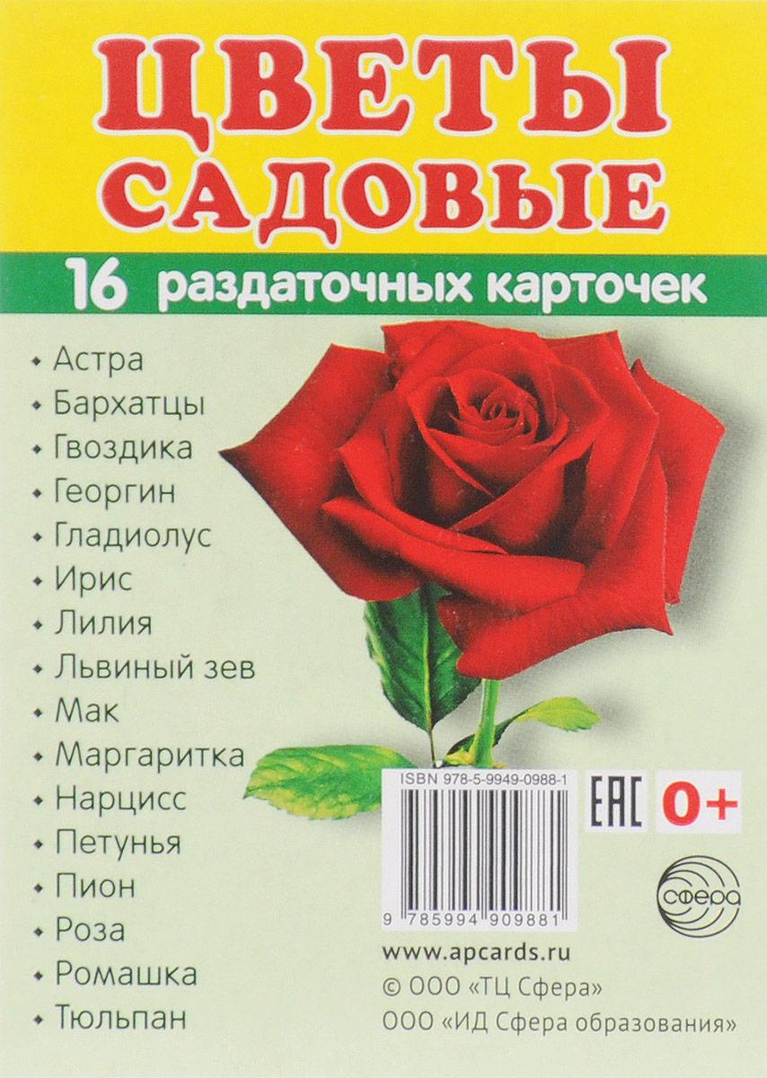 Цветы садовые (набор из 16 карточек) садовые цветы комплект из 4 плакатов