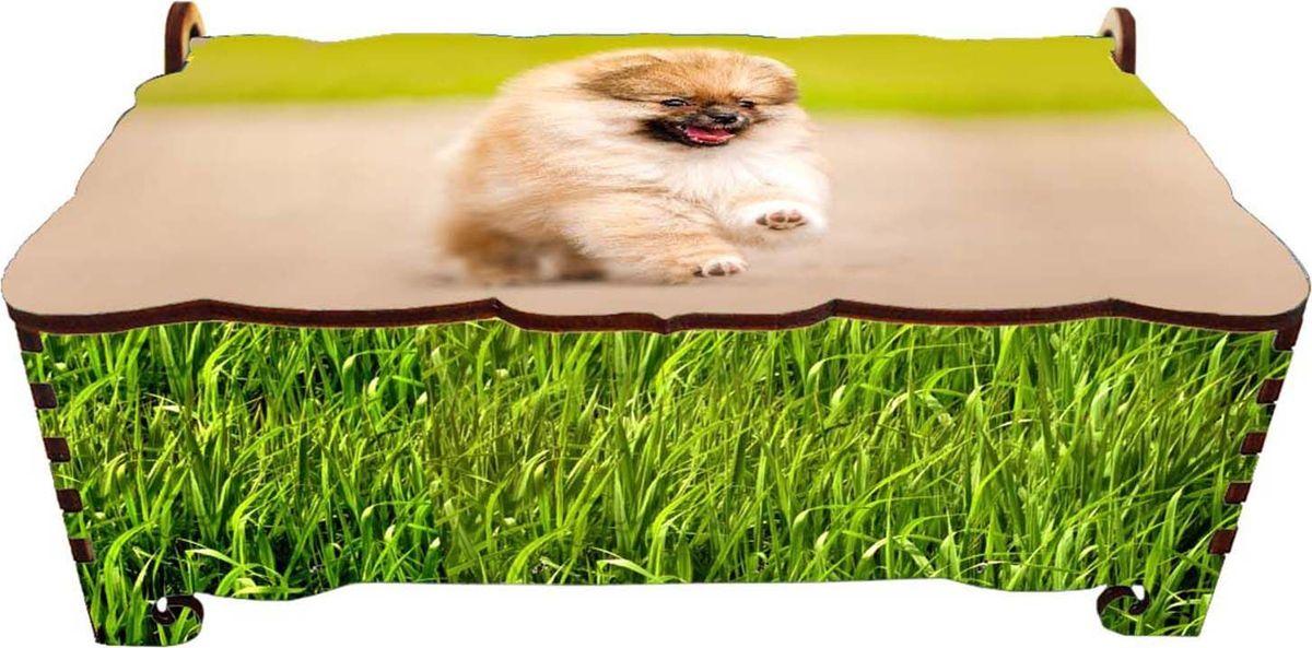 """Шкатулка-купюрница Sima-land """"Смешной шпиц"""" , цвет: зеленый, 16,5 см х 9 см х 6 см"""