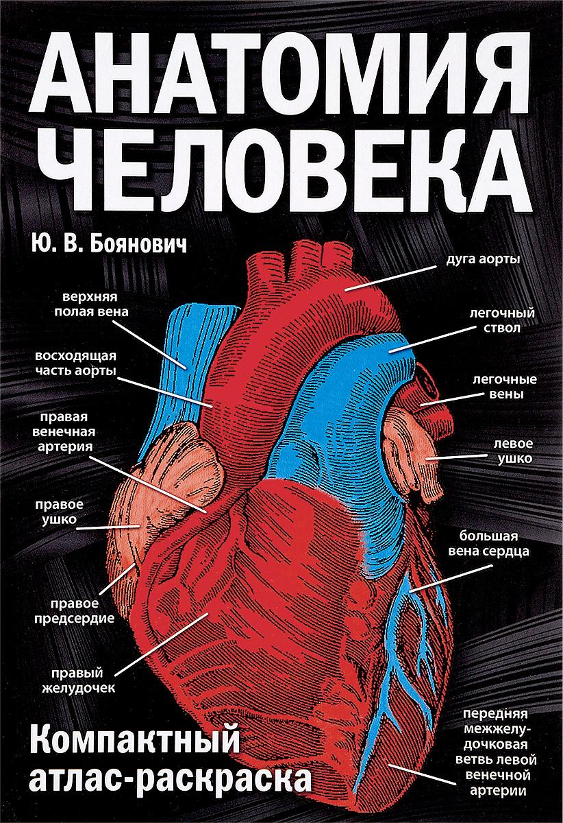 Ю. В. Боянович Анатомия человека. Компактный атлас-раскраска анатомия человека русско латинский атлас
