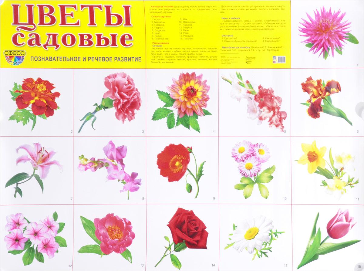 Цветы садовые. Познавательное и речевое развитие