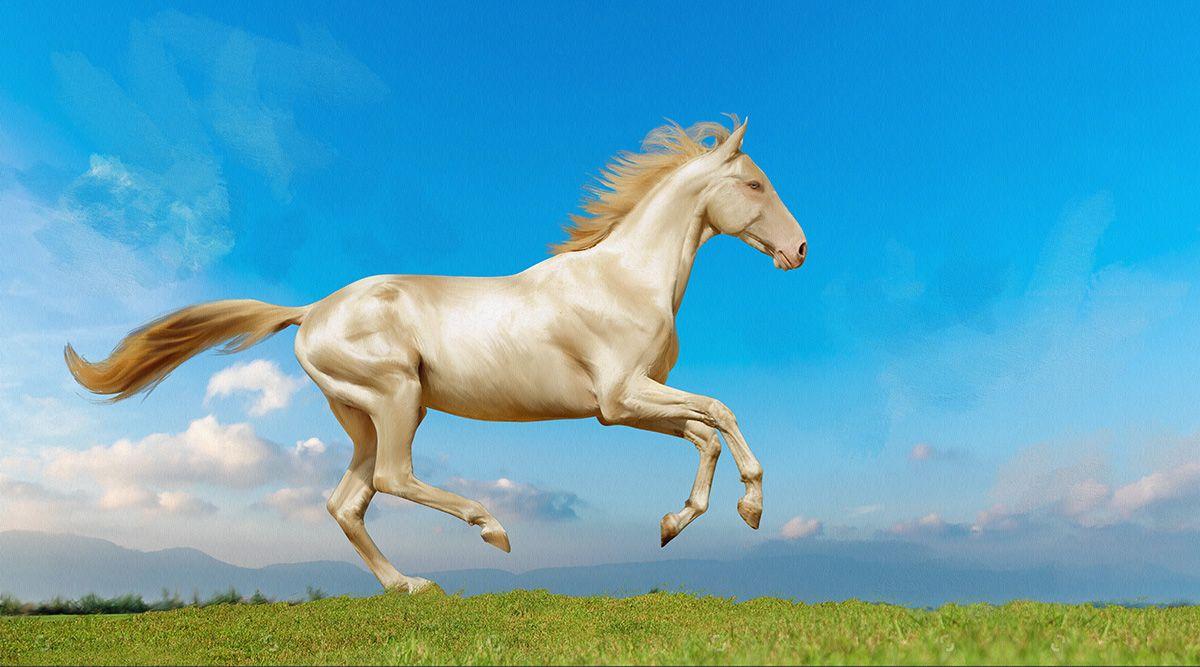 Фотообои антивандальные Antimarker Ахалтекинский конь, супермоющиеся, 270 х 150 см2-A-2015