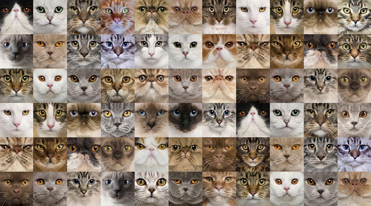 Фотообои антивандальные Antimarker Кошки, супермоющиеся, 270 х 150 см2-А-2032