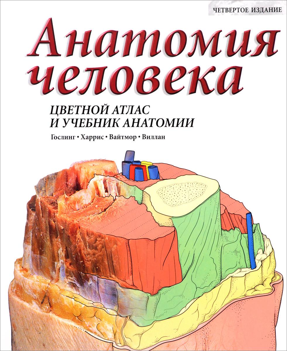 Анатомия человека. Цветной атлас и учебник