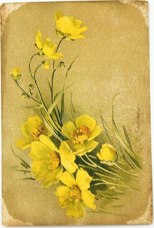 Открытка Жёлтые полевые цветы. Авторская работа. Ц7Ц7