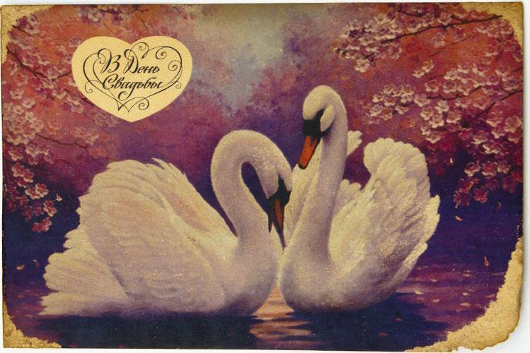 Открытка Влюбленные лебеди на розовом фоне. Авторская работа. С5С5