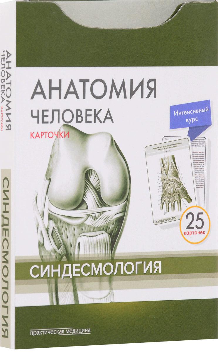 Анатомия человека. Синдесмология (набор из 25 карточек)