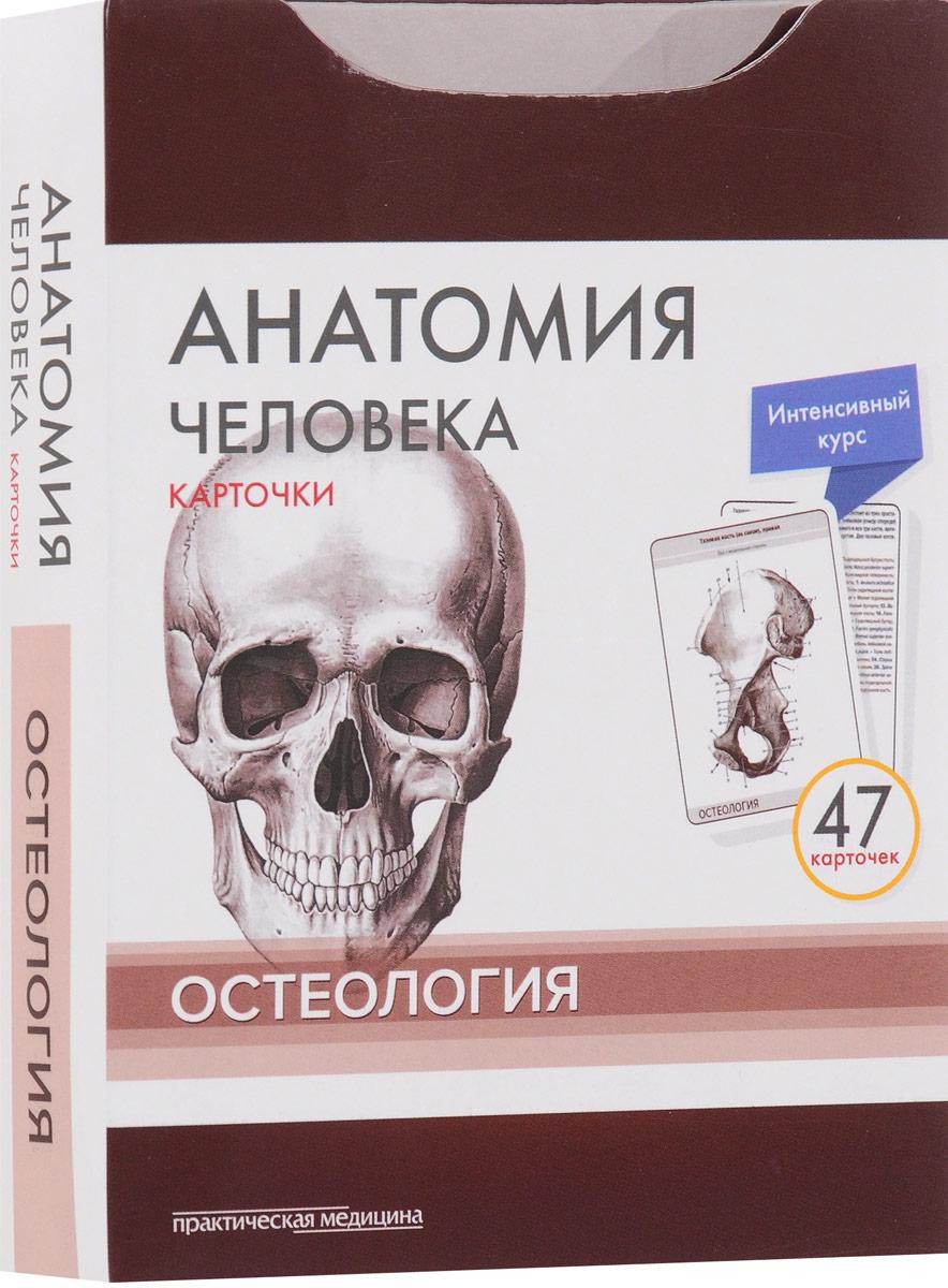 Анатомия человека. Остеология (набор из 47 карточек)