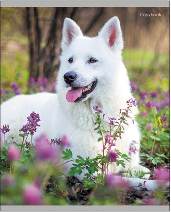 Канц-Эксмо Тетрадь Белоснежные собаки 48 листов в клеткуТК2Л485368Тетрадь Канц-Эксмо Белоснежные собаки формата А5 великолепно подойдет для записей и конспектов. Тетрадь имеет внутренний блок на скрепках из белой офсетной бумаги плотностью 60гр/м2 с разметкой в клетку. Обложка выполнена из мелованного картона с твин-лаком.