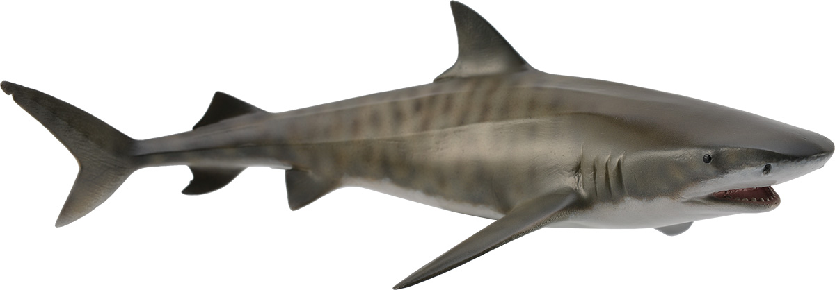 Collecta Фигурка Тигровая акула неовенатор l 17 см collecta