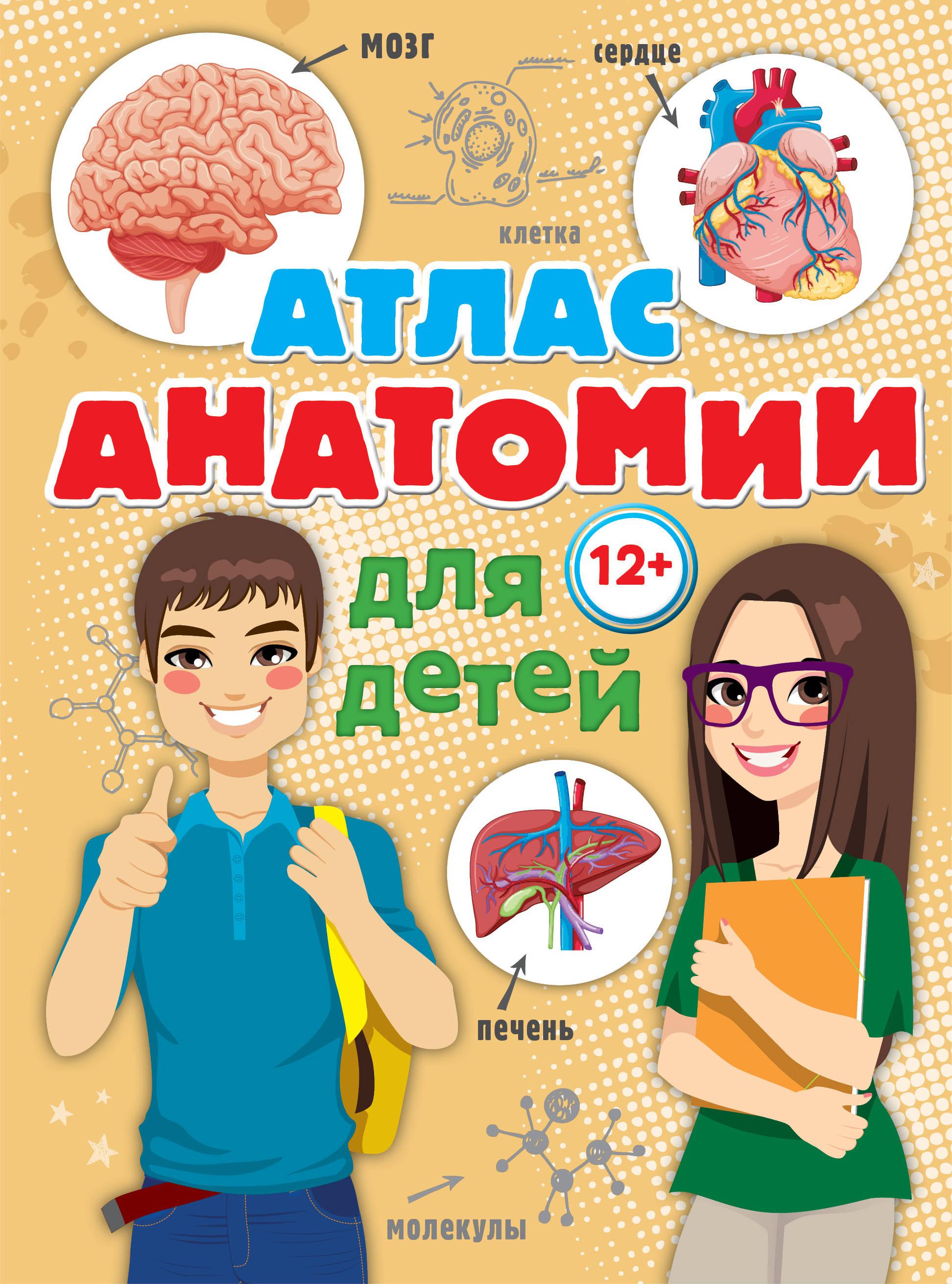 Александр Швырев Атлас анатомии для детей анна спектор большой иллюстрированный атлас анатомии человека