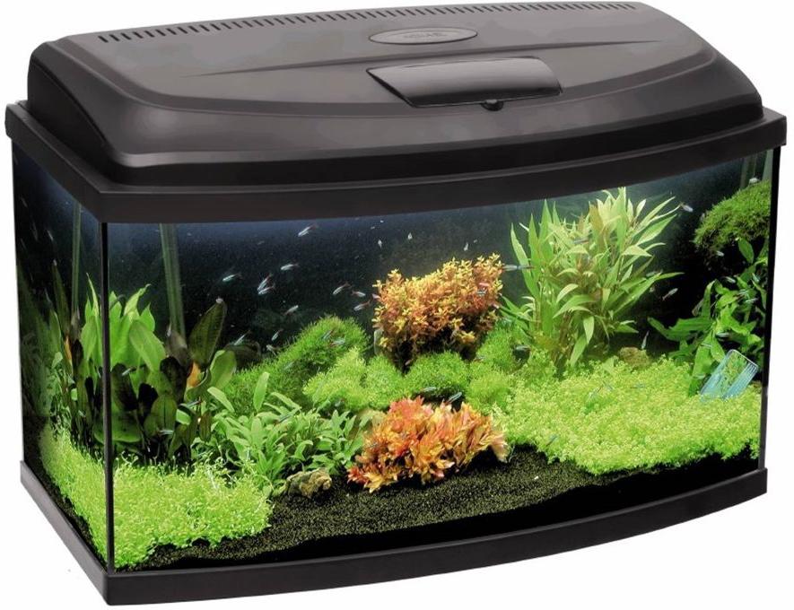 Aквариум Aquael Classiс Led 50, фигурный, без оборудования, 40 л106625Aквариум Aquael Classiс Led 50 выполнен из высококачественного стекла и склеен вручную специализированным долговечным аквариумным силиконом, который абсолютно безвреден для аквариумных обитателей. Крышка, отлитая под давлением по соинжекционной технологии, оборудована запатентованной системой открывания Smart Open, которая позволяет отказаться от применения петель и опорных конструкций и обеспечивает легкий доступ внутрь аквариума. В задней части крышки имеются специальные пазы под выпилы отверстий, предназначенных для удобной установки шлангов от любого типа канистровых или каскадных фильтров. Производителем предусмотрена крышечка для кормления рыб. Аквариум оборудован современным диодным осветительным модулем Leddy Tube (LED 6 W), гарантирующим 50 000 часов бесперебойной работы.Размеры аквариума: 52 х 33 х 40 см.