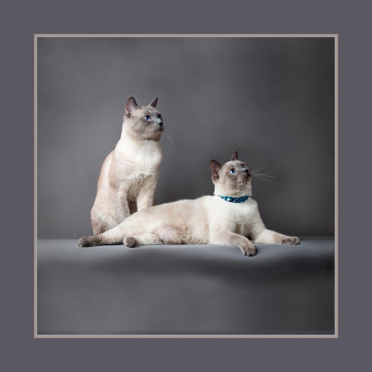 Наволочка декоративная Рапира Тайские кошки, 45 х 45 см. 2922 декоративные подушки santalino декоративная наволочка mignon 45х45