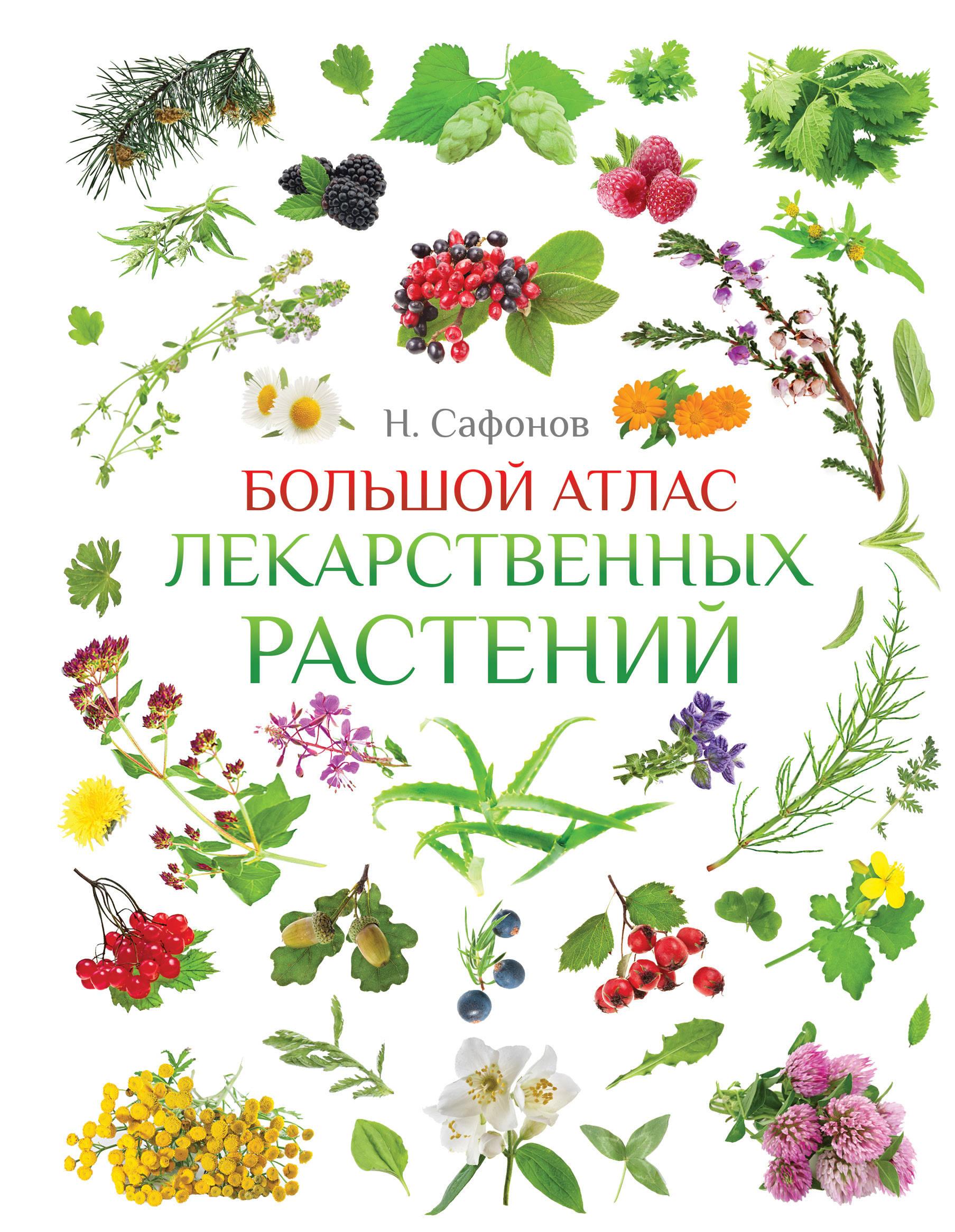 Большой атлас лекарственных растений. Н. Сафонов