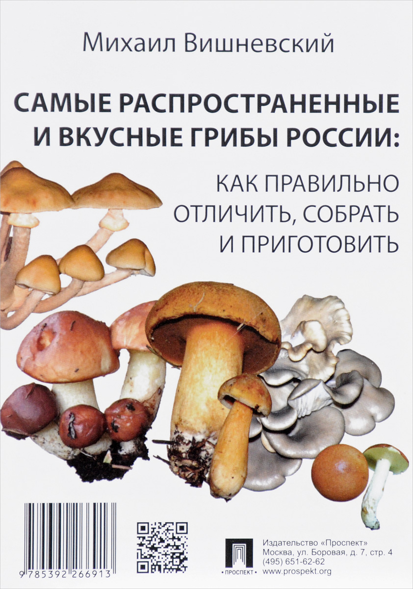 Самые распространенные и вкусные грибы России. Как правильно отличить, собрать и приготовить