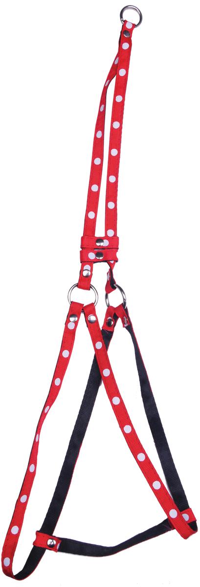 Комплект для животных GLG: шлейка, поводок, цвет: красный, 55-65 смAM827-2-S-R