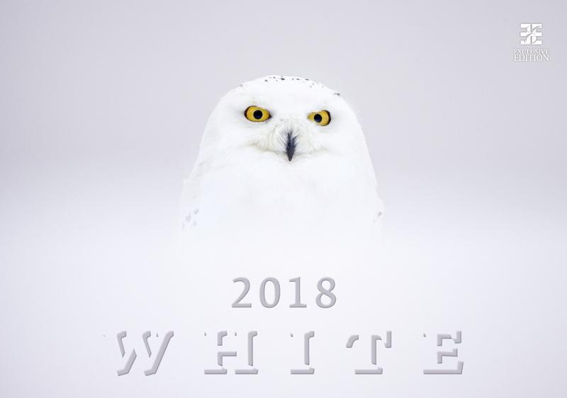 Календарь 2018 (на спирали). White