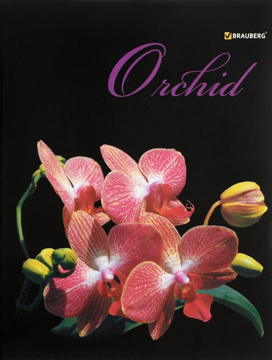 Brauberg Тетрадь Эко Орхидеи 48 листов в клетку401287Великолепное изображение орхидеи так и манит вдохнуть аромат этого великолепного цветка. Элегантное оформление обложки наверняка оценят все любители прекрасного.•Формат - А5. •Обложка - мелованный картон. •Внутренний блок - офсет, 60 г/м2, клетка. •48 листов. •Скрепление - скрепка. •Упаковка - ассорти (4 вида обложки).