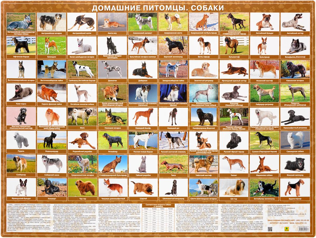 Zakazat.ru: Домашние питомцы. Собаки