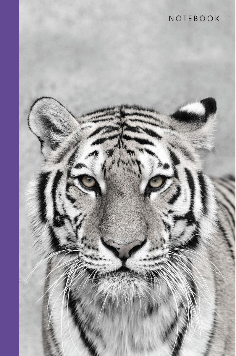 Канц-Эксмо Записная книжка Живая планета Тигр в клетку 80 листов формат А5КЗ5802373Книга для записей А5 (145х210), 80л.