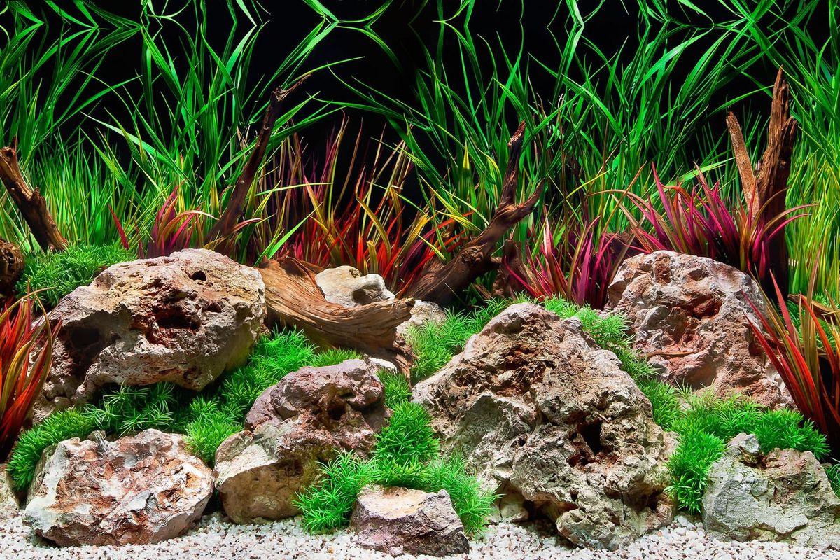 Фон аквариумный Barbus