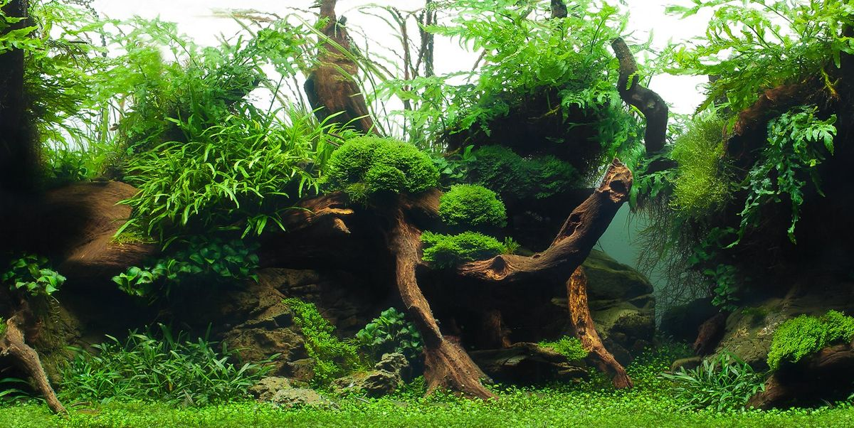 Фон аквариумный Barbus Зеленый рай. Воды амазонки, двухсторонний, 60 х 124 смBACKGROUND 042