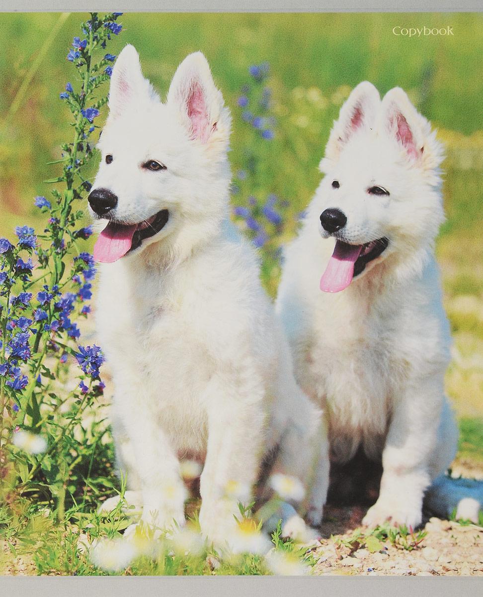 Канц-Эксмо Тетрадь Белоснежные собаки 48 листов в клетку канц эксмо тетрадь магия чисел 48 листов в клетку