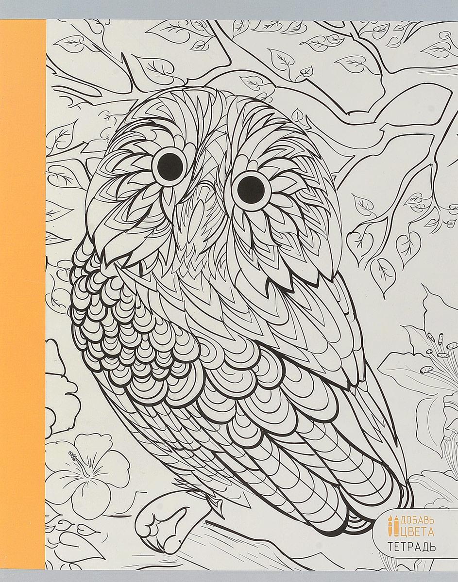 Канц-Эксмо Тетрадь Удивительные животные Сова 96 листов в клетку цвет персиковый канц эксмо тетрадь гармония цвета 96 листов в клетку