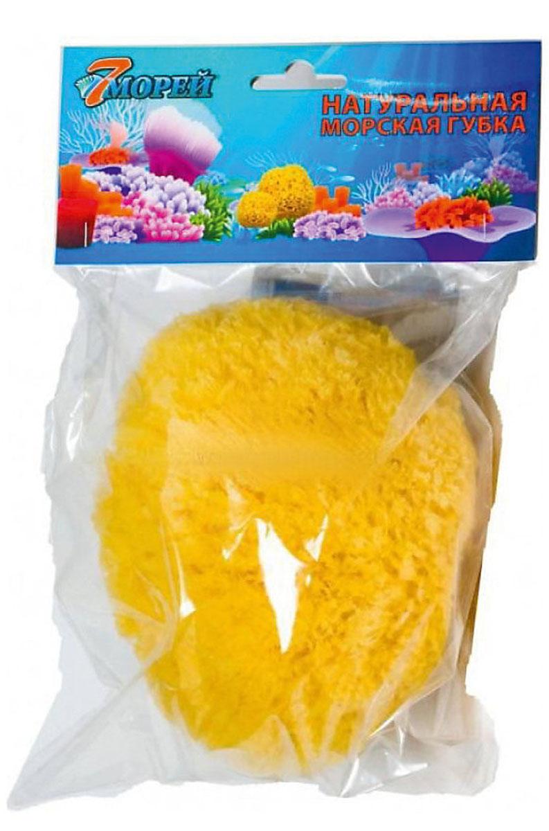 7 морей Губка детская Файн Силк натуральная морская 3,8-5 см4607179880059Губка Премиум класса, невероятно мягкая и гладкая, супервпитывающая и самая длительная в использовании (до 2-х лет) из всех губок.Поры этих губок очень маленькие, благодаря чему увеличивается прочность, и как следствие более длительная эксплуатация.Используется во многих областях жизни, в том числе для купания и косметических целей.Прекрасный выбор для применения в косметических целях (для лица).Используйте ее ежедневно, когда удаляете косметику, или применяете очищающие лосьоны и кремы.Идеально подходят для купания детей с рождения.Рекомендации по использованию губок для купания:* не погружайте морскую губку в очень горячую воду* после мытья тщательно промойте морскую губку с мылом и хорошенько отожмите её, не выкручивая* для мытья самих морских губок применяйте деликатные сорта мыла* не кладите морскую губку в пакет или купальную шапочку* не сушите морскую губку на солнце