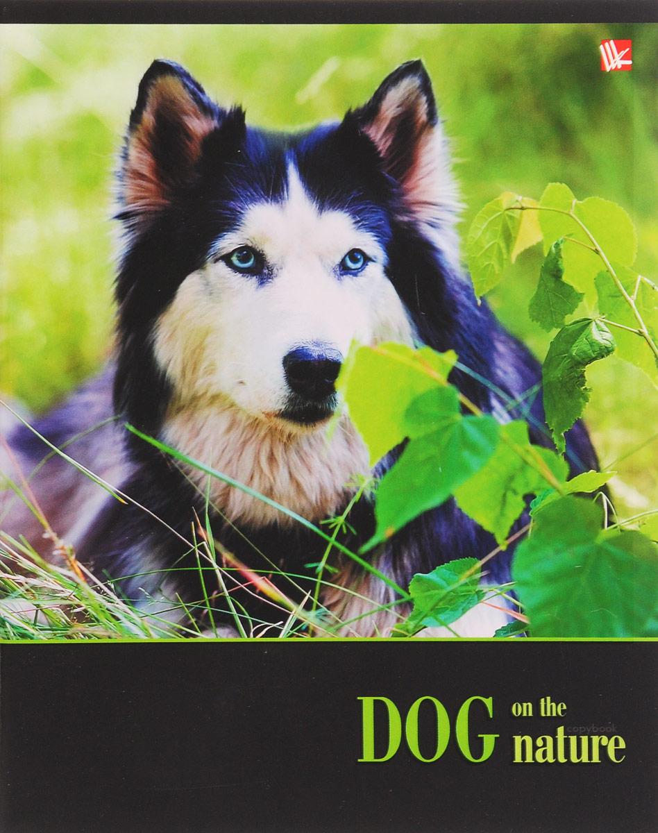 Канц-Эксмо Тетрадь Собаки на прогулке 48 листов в клетку цвет зеленый книги эксмо хозяин собаки