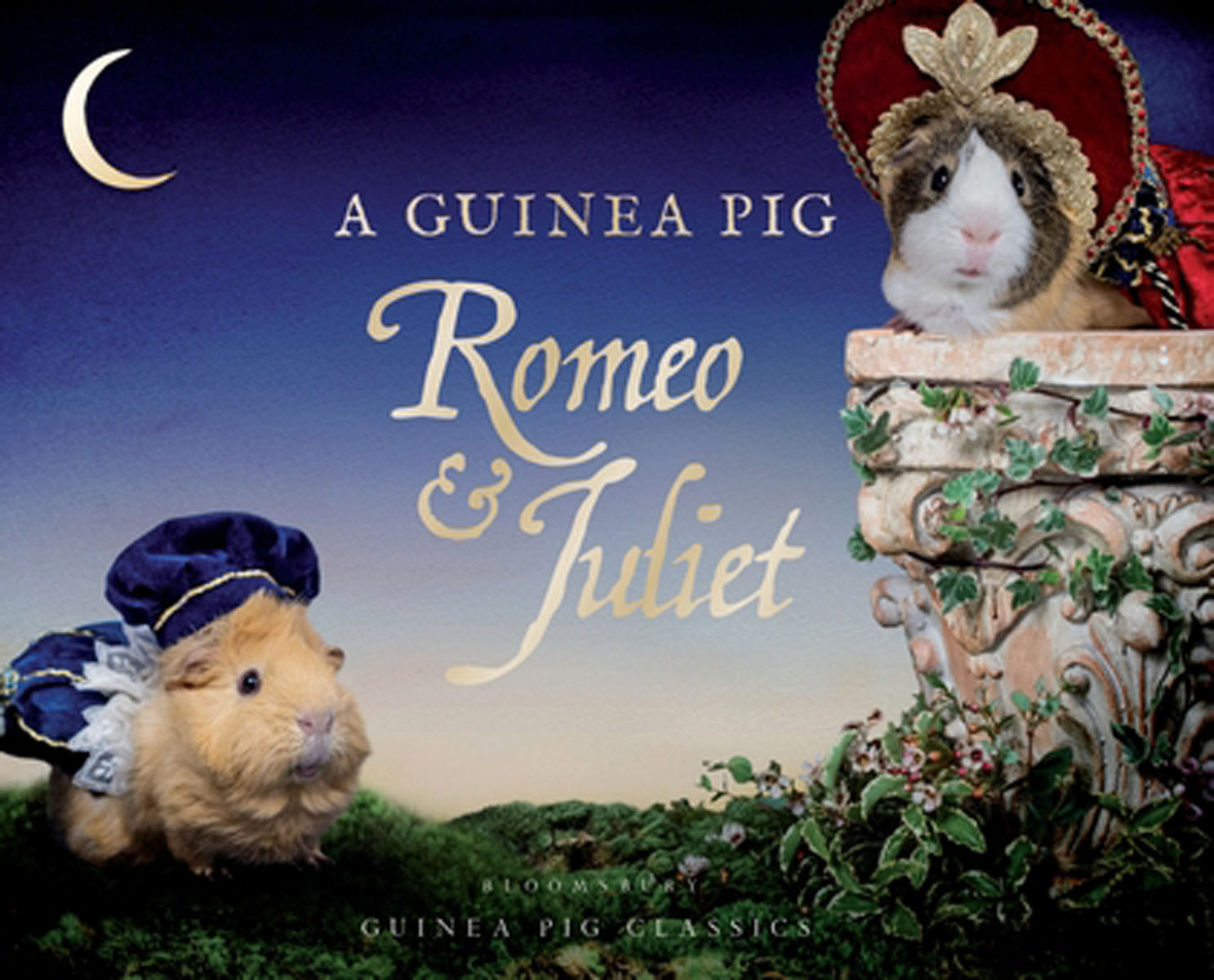 A Guinea Pig Romeo & Juliet romeo and juliet