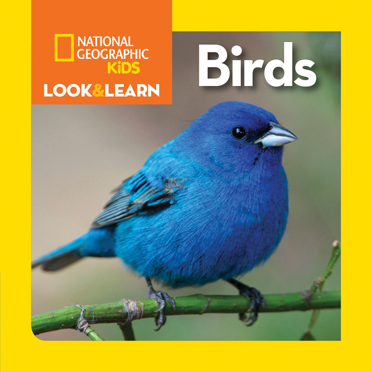 National Geographic Kids Look and Learn: Birds national geographic kids chapters scrapes with snakes